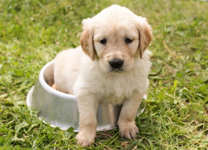 Chiot, avoir un chien 5 choses a savoir
